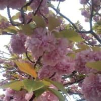 春もそろそろ…