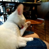 English Diary:A rescued cat's cafe