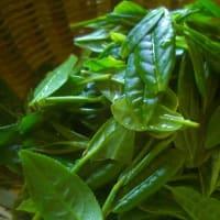 苣木お茶倶楽部の煎茶・水出し緑茶・和紅茶の販売を始めました。