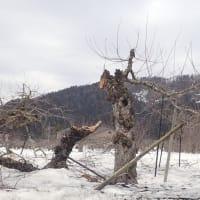 2021豪雪と被害