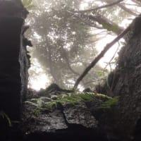 濃霧と赤い芽