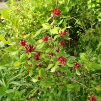 入管法改正案 採決強行は許されない/可憐なオオヤマレンゲの花、クロバナロウバイも開花