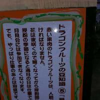 沖縄2日目