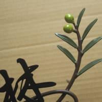 オリーブの実×葉っぱ×ツタ×木の漢字表札
