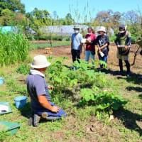 週末オンライン自然菜園セミナー『自然菜園入門』『自然菜園根本講座』