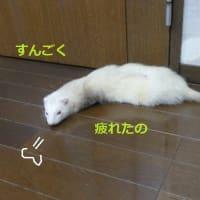 ネルの初体験(;´Д`)