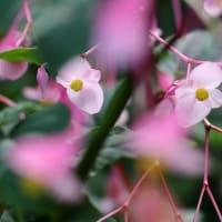 秋の花~~