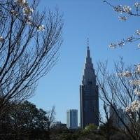 「桜・白」/新宿御苑2020