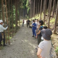 北山杉の里で「林業学習・体験+森ヨガ」を開催しました