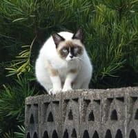 鞍岳・ツームシ山のレットさんと、猫さんとコットンのプールドルさん。