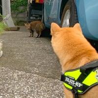 柴犬と猫 出逢いは突然だった