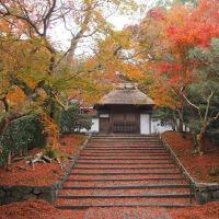 法然院と安楽寺の散り紅葉