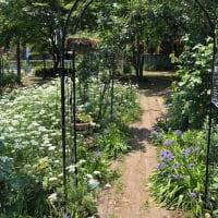 以前から気になってた人んちの庭
