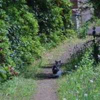 林と畑の間にある道で猫に出会う、、【調布市:散歩】2021.5.10