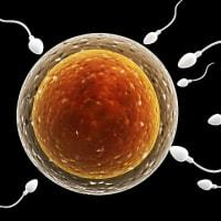 精子の選別がより確かに簡便に
