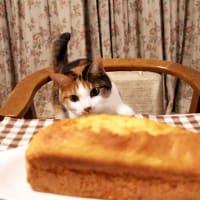 ポポーのケーキにゃの。
