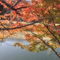 2020年11月14日(土)陳式太極拳36式1.起勢