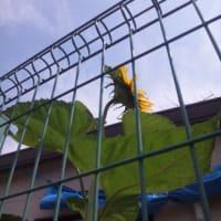 西瓜の種が宙を舞う