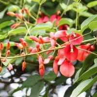 夏らしい、真っ赤な花‥②
