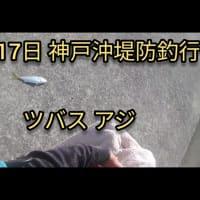 2020年6月17日 神戸沖堤防で魚釣り。ツバス アジ釣れてます!
