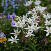 庭の花と、昨日の話の続きみたいな感じで