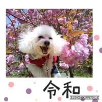 ブログのお題  愛犬の思い出教えてください