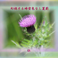 『 幻視する時空色なし夏薊 』遊行期游泳575zqv1407