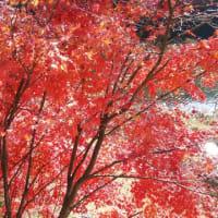 富岡の11月例会は、一泊合宿、豪華版でした。