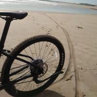 サクラと浜辺遊び