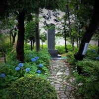 西野神社の紫陽花