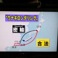 ウナギ密輸NHK力作