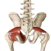 仙腸関節痛といえば「腰方形筋」!!テレワーク腰痛DAY3#側屈型腰痛の対処法