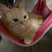 里親さん募集中の猫