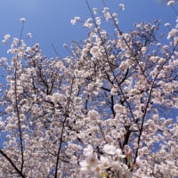 春を探して♪PartⅢ