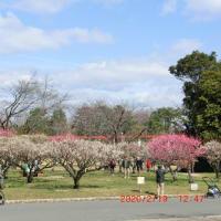 服部緑地公園の梅園