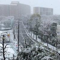 『桜舞うから一転、雪』