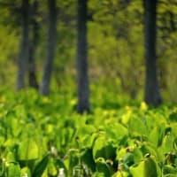 5181 湿原