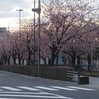 安行桜の紅葉・・・意外と好き(#^.^#)