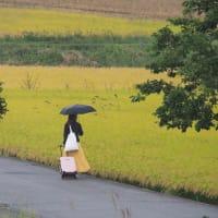 窓の外は雨・・・台風17号