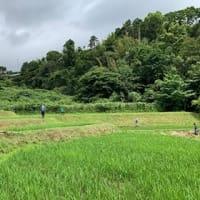 棚田ボランティア【草刈り】