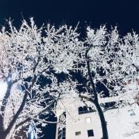 北海道は寒い日が続いています。