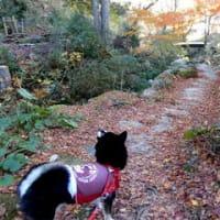 松平郷のんびり散歩 1