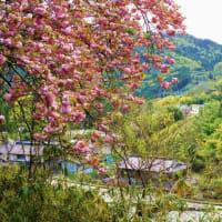 和束峠道の光景