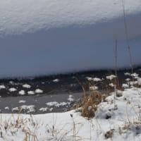 白いもみじ浮かぶ八島湿原をスノーシューする。