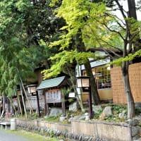 八重の桜に、湧水の深大寺。③-③ 東京都調布市。
