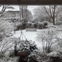 春の大雪になりました