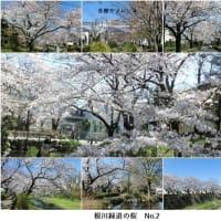 満開の桜を満喫
