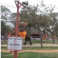 津波直前、ゾウが観光客乗せ高台に タイ南部で難逃れる