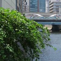 秋葉原はまたまた和泉橋で撮影「Maxとき、たにがわ321号」 (2019年9月 秋葉原から新宿)