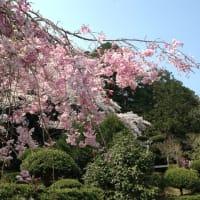 4月と5月のヨーガ教室はお休みですが、皆でお家でヨーガしましょう